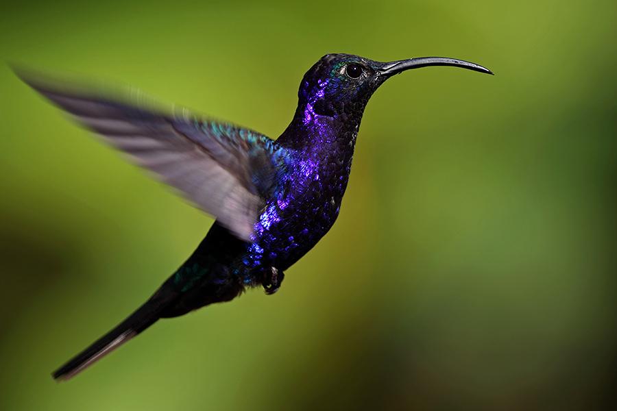 hd hummingbird wallpaper